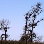 28 nids de cigognes